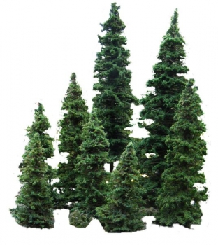Working Spruce Tree 21-23 mm